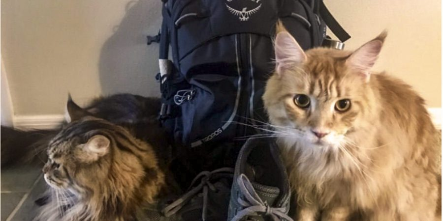 Two cats small backpack