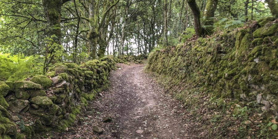 Wooded path between Sarria and Portomarín